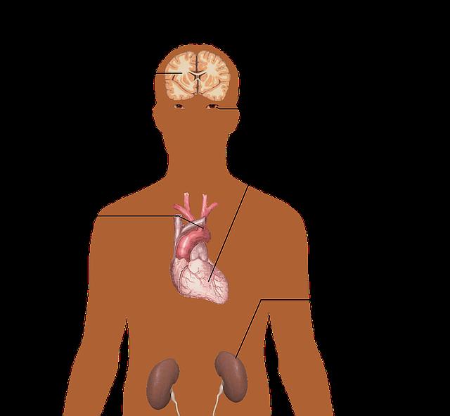 the-human-body-1279987_640